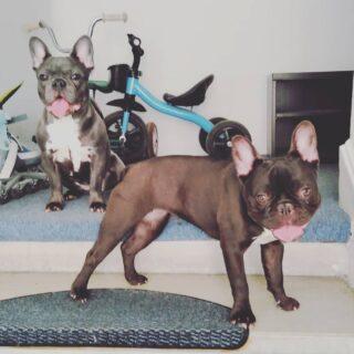 2 fete cucuiete #urbanimal #dogwalking #petsitting #doglifeisgood🐾